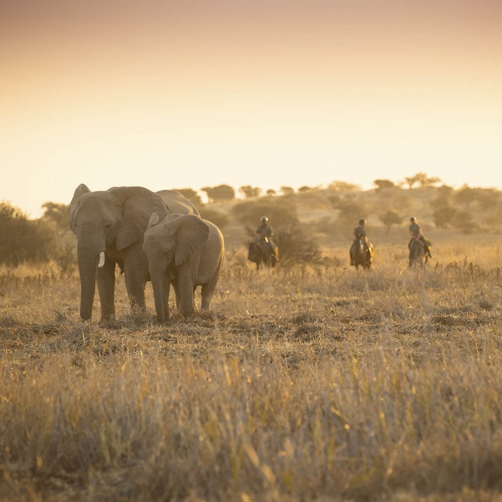 elephants in horseback safari south africa