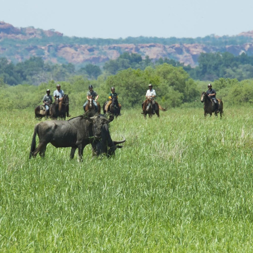 wildbeast in southafrica horseback safari