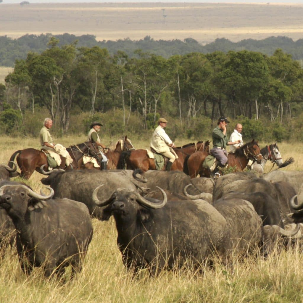 group on horseback safari facing buffalos