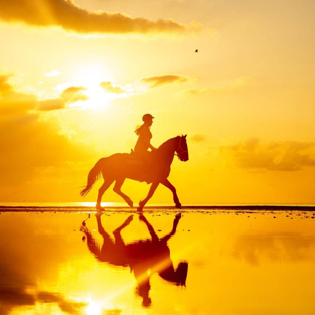 mozambique horseback experience