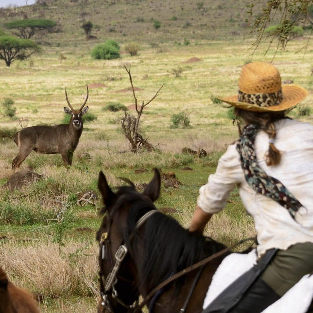 horseback safari gacelle