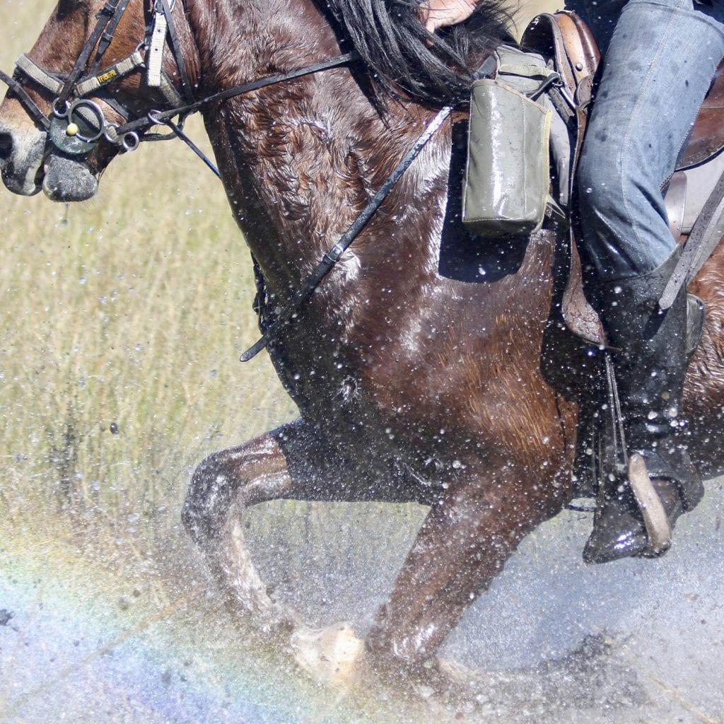 okavango delta horseback safari